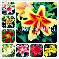 200 stücke samen gemischte farbe lilie blume billig parfüm lilie bonsai mischen verschiedene sorten blume eintopfpflanze für hausgarten