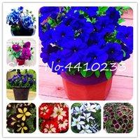 정말 분재 500 PC 멀티 컬러 피튜니아 분재 식물 씨앗 아름다운 피튜니아 짧은 높이 정원 다년생 꽃 화분 정원
