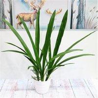 """Falso Folha Cymbidium 23,62"""" comprimento Simulação Verdura toque real folhas para o casamento de plantas Início Artificial decorativa"""