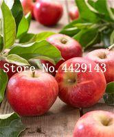 30 PC / 가방 씨앗 Dwarf Apple 분재 미니어처 사과 나무 달콤한 유기농 과일 야채 꽃 식물 실내 또는 옥외 공장 가정 정원