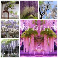 Bonsai 50 Pcs Bonsai Planta Sementes Escalada Wisteria Flores Outdoor Courtyard Jardim Flores Japonês Wisteria Fresco Viable Malinhante incrível