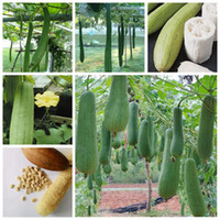 20pcs / 가방 씨앗 희귀 맛있는 루페라 맛있는 유기 분재 야외 다년생 스펀지 조롱박 정원 장식에 대 한 야채 식물