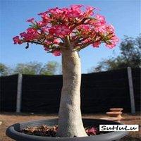 10 pcs / sac Beaucoup de genres adénium obésum fleur désert rose plantes de bonsaï plantes pour maison de jardinage monde rare belle fleurs Promotion!