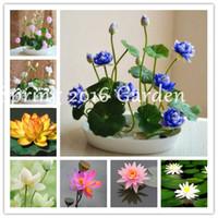 Bonsai Flor de Lotus Flower para o verão 100% de sementes Water Lily real bacia Lotus Pots Bonsai Jardim constante Nymphaea Planta 10 pcs / saco