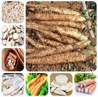 100 pièces Graines de bonsai d'igname pourpre « ginseng pourpre » plante comestible racine cylindrique haute nutrition saine légume organique vert