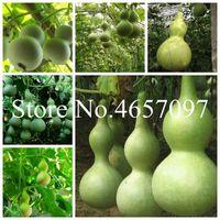 50 Adet Yeni Şişe Sukabağı Bonsai tohumu Büyük Şarap Sukabağı Kaşık Lagenaria siceraria Bonsai Calabash Kabak Sebze Bonsai Home For Bahçe
