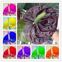 1000 Teile/Satz Anthurium Bonsai Pflanze Blumensamen