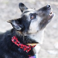Natale Dog Pet Collari XS S Snowflake arco del cane del cucciolo del gatto collare regolabile Guinzaglio fibbia collana Strap Pet Supplies