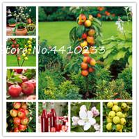 30 PC를 드워프 애플 분재, 미니 사과 나무, 유기 달콤한 과일 나무 야채 분재 DIY의 홈 정원 실내 야외 식물 씨앗
