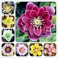새로운 200 PCS Helleborus 꽃 겨울 장미 꽃 분재 식물 씨앗 화분에 심은 식물 야외 공장 가정 및 정원 빗자루 로터스 공장