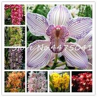 200 шт. Уникальный орхидеи Cymbidium Faberi Flower Bonsai Семена растений Cymbibium Полулыльский сад Цветущие сад редкие бабочки орхидеи растений