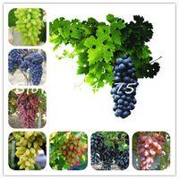 1000 stücke pro Beutel Traubensamen Baum Bonsai Obst Schwarz Traube Pflanzen Zwergtrauben Baum Easy Grow Japanische Zwergfrucht Für Hausgarten Pflanzung