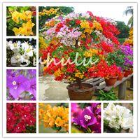 Bougainvillea Bonsaiレアカラフルな登山Bougainvillea植物種子Spectabilis Willd Perennial Flower Garden Bonsai Pot 200 PCS