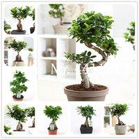 Chino raro ficus microcarpa árbol bonsai planta semillas 50 unids china raíces sements bonsai ginseng banyan home garden árbol al aire libre plantación
