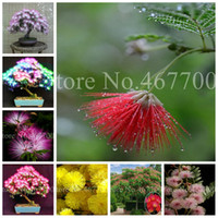 20 pcs Seeds Bonsai Albizia Flower Bonsai Outdoor Blooming Mimosa Silk Tree For Flower Potted Plants Ornamental Plant For Home Garden