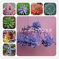 200 PC / bolso Semillas de flor de agave Bonsai Plantas colores mezclados raras suculento de Bonsai perenne de floración Agave Plantas de macetas del jardín de DIY