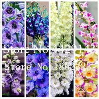 Envío gratis 200 PCS Dendrobium plantas Potted Flower Bonsai Planta Semillas Variedad Completa la tasa en ciernes 95% Colores mixtos Semento Fácil Crecimiento