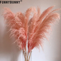 FUNNYBUNNY 1PC rosa Reed Trumpet Reed Secas Flor Spikes Flores secadas Home Decor Amor Central de Presentes Suas Pieces T200103 Luxo