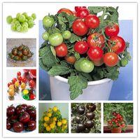 ¡Gran venta! 500 PCS Rare Mini Cherry Tomato Planta Semillas, Balcón Frutas Dulces Verduras Bonsai Potted Bonsai, Home Garden Sembres Semillas Subculentos
