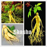 Haute quacité de 20 pcs Chinese Hardy Hardy Panax Ginseng Graines Corée Ginseng Bonsai King des Herbes Plantes à la maison Haut-nutrition Légumes et fruits