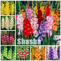 300 PCS Gladiolus Bonsai Flower Semillas Flores Piscina Potted Plantas Interior Aerobic Gladiolo Flower Plantas para la siembra de jardín