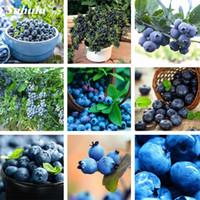 블루 베리 분재 100 PCS 과일 트리 Highbush 블루 베리 DIY 카운티 카이 화재 식물 홈 정원 식물 재배 식물 과일 씨앗