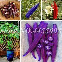 Hot Sale Sementes 100 unidades Rare vegetais Quiabo Bonsai Verde Saudável Delicioso DIY Início Jardim Plantas em vasos ao ar livre orgânico planta frete grátis