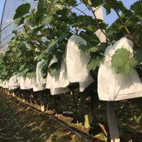 حقائب 50PCS العنب حماية للكيس الفاكهة الخضار العنب شبكة حقيبة ضد الحشرات الحقيبة ماء مكافحة الحشرات مكافحة الطيور حديقة النباتات