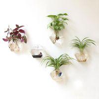 Mkono 2 Adet Duvar Saksı Bitki Saksı Küçük Bitkileri Teraryumlar Ev Dekorasyonu Asma Cam Vazo Duvar Monteli, Altıgen Şekli