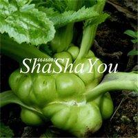100% echte Riese 200 stücke Samen Brasingica Juncea Bonsai Riesige Marconi Hybrid, DIY Hausgarten Gemüsepflanze Kostenloser Versand