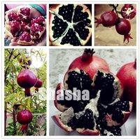 100 개 / 홈 정원 실내 또는 야외 과일 나무를위한 가방 희귀 블랙 석류 분재 씨앗 중국어 큰 석류 맛있는 과일