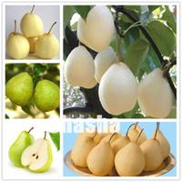 50 PC 배 씨앗 (Pyrus communis) 희귀 유기농 과일 나무 분재가 정원 식물을위한 분재 슈퍼 달콤한 과일 분재