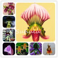 500 pcs saco orquídea flores sementes, raro orquídea bonsai original macaco rosto flor plante crescimento natural flor bonsai para jardim de casa