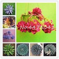 500 semillas de plantas PC / bolso Agave flor de Bonsai, Rare Suculento perenne buena vida Bonsais florecientes de la planta de Agave Planta de tiesto Para el hogar Decoración del jardín