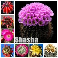 Vendita calda! 400 pz Semi piante succulente mini Cactus Lotus Lithops bonsai giardinaggio domestico Vasi di fiori Balcone fiori impedire la radiazione