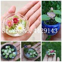 10 pcs / sac graines Abreuvoir lotus lys rare fleur aquatique plantes vivaces bonsaïs pour jardin d'ornement maison Bonsai