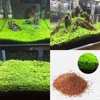 Toptan Bahçe Fish Tank Akvaryum Bitki tohumları Aquatic Su Çim Süs Bitki Ev Yard Dekorasyon Sigara GDO tohumları
