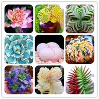 Bonsai 2000 pz raro semi di cactus piante da fiori ibrido pseudotruncatella succulente bonsai bonsai crudo pietra cactus piante in vaso 2020 nuovo