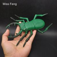 I635 / Big Green Beetle Early Head Start Juego de entrenamiento Toy Kid Insect Model