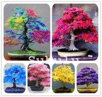100% истинные США редкие радуги кленовые растения бонсайские семена деревьев горшок костюм для DIY домашний сад японских красивых многоцветных кленовых семян 30 шт. / Сумка