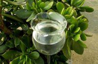 Arrosage auto Globes-soufflé à la main Mini verre automatique usine Abreuvoir Bulbes à fleurs décoratives design, Ensemble de 2pcs