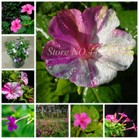 Vendita calda 100 pezzi semi multicolore arcobaleno gelsomino piante fragrante pianta mirabilis gelsomino bonsai pianta in vaso per fai da te casa giardino