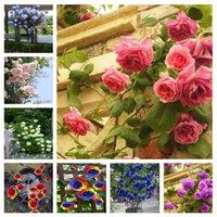 뜨거운 판매! 홈 가든 로즈 미니 트리 다채로운 분재 장미 꽃 화분을 등반 500 개 희귀 장미 나무 씨앗 로사 꽃 미니