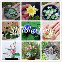 Heißer Verkauf-10 Stk / Packung Schüssel Lotussamen Bonsai hydroponische Pflanzen Wasserpflanzen Blumen Bonsai Topf Lotus Pflanze Bonsai Garden