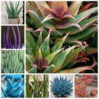 200 pcs Aloe Vera Potechnrent Pochette Lucky Aloe Plantes Intérieur Bonsaï Plante Graines Beauté De Jardin Beauté Fruit Pot Vegeable Potta Facile grandir
