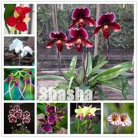 300 PC / 팩 Phalaenopsis 난초 분재 씨앗 사랑 스럽다 나비 난초 꽃 분재 하늘 블루 식물 정원 식물 화분에 심은 식물