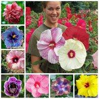En soldes!!! 200pcs hibiscus plantes 19kinds bonsaï hibiscus rosa-sinensis fleur planta hibiscustree plantes pour plantes en pot de fleurs