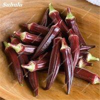 50 pcs / Sementes de sacos quiabo raro quiabo muito fácil orgânico não OGM verde e delicioso pátio vegetal para jardim caseiro Decoração Bonsai