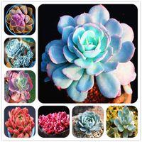 Vente Chaude! Bleu lotus succulent 200 Pcs Graines Bonsaï Plantes Fleur Maison Jardin Pot Plantes propre air décoré jardin balcon