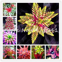 1000 pcs cactus bromeliad plantes rares fleur colorées Bonsai Courtyard mini succulente bonsaï bricolage maison jardin jardin graines